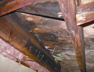 mold and rot in a Victoria crawl space