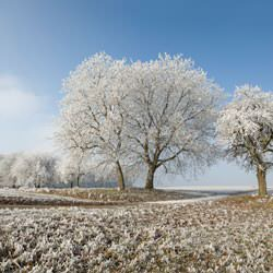 Frost covering trees and a grassy field in Bulverde